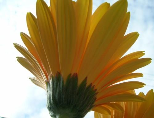 10 kroków do szczęścia – według Joanny Stelmach