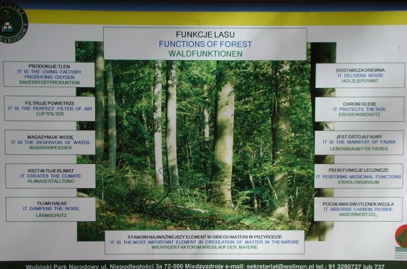 Funkcje lasu - tablica w Wolińskim Parku Narodowym
